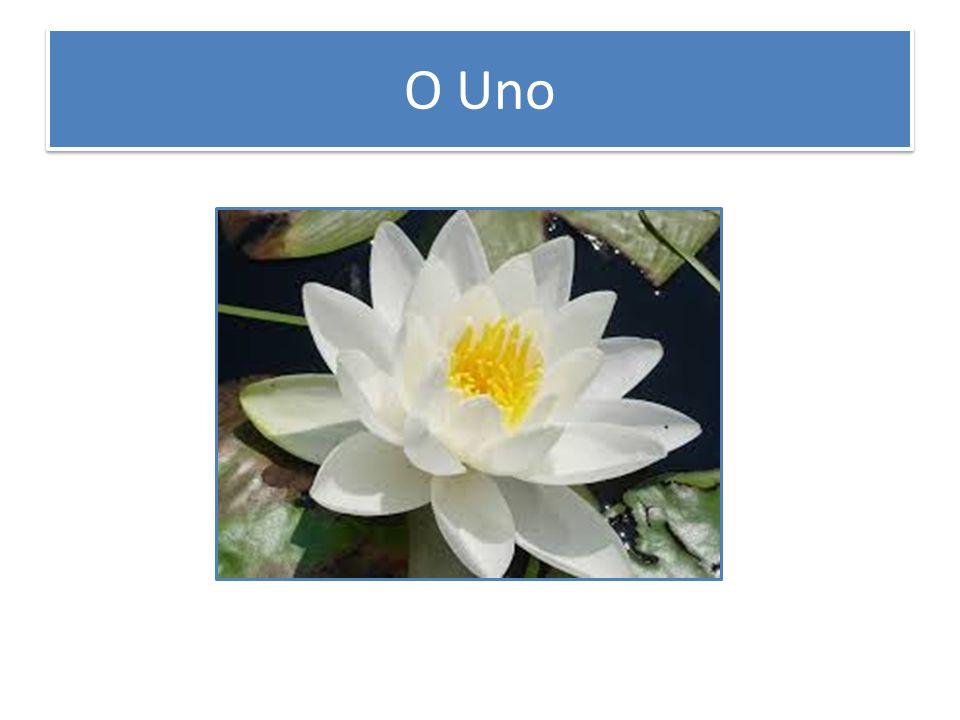 O Uno