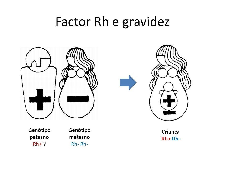 Factor Rh e gravidez Genótipo paterno Rh+ Genótipo materno Rh- Rh-