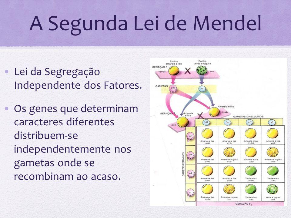 A Segunda Lei de Mendel Lei da Segregação Independente dos Fatores.