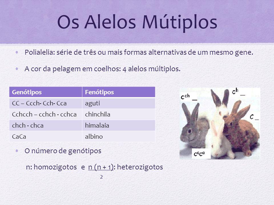 Os Alelos Mútiplos Polialelia: série de três ou mais formas alternativas de um mesmo gene. A cor da pelagem em coelhos: 4 alelos múltiplos.