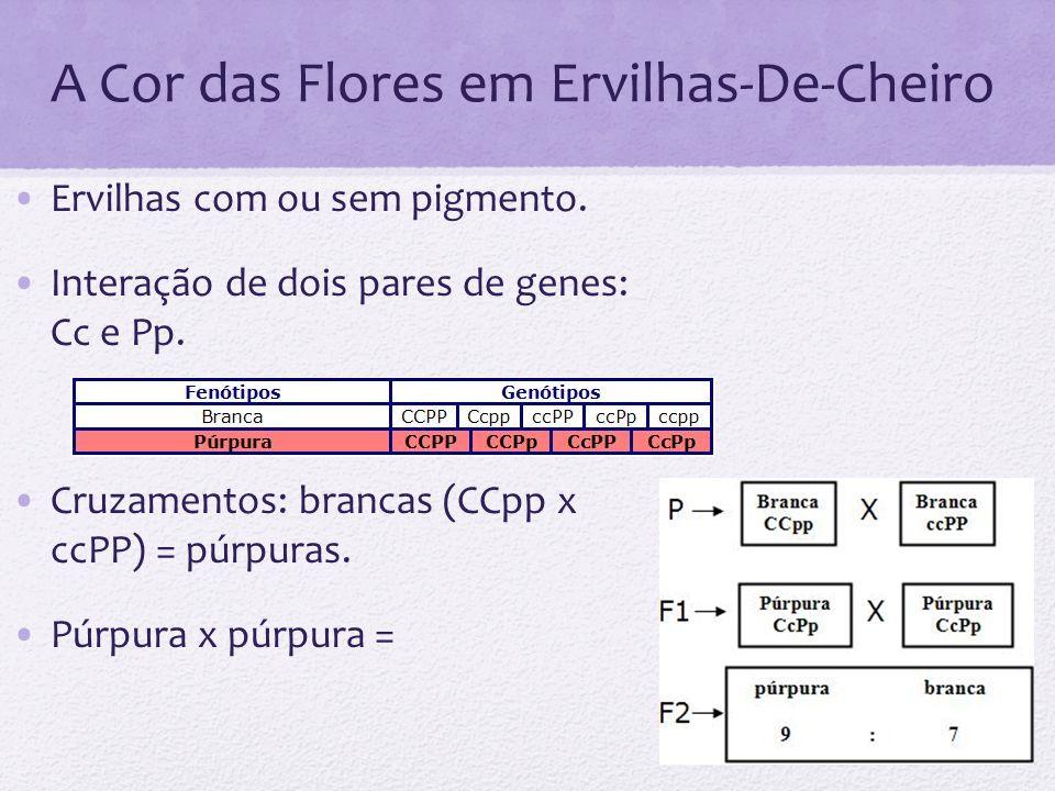 A Cor das Flores em Ervilhas-De-Cheiro