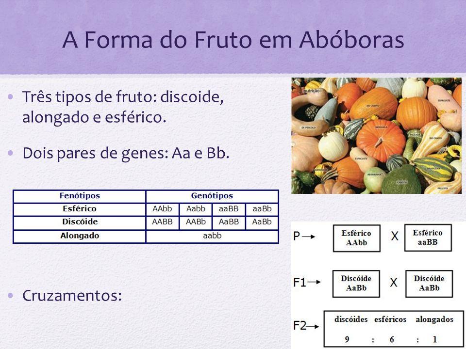 A Forma do Fruto em Abóboras