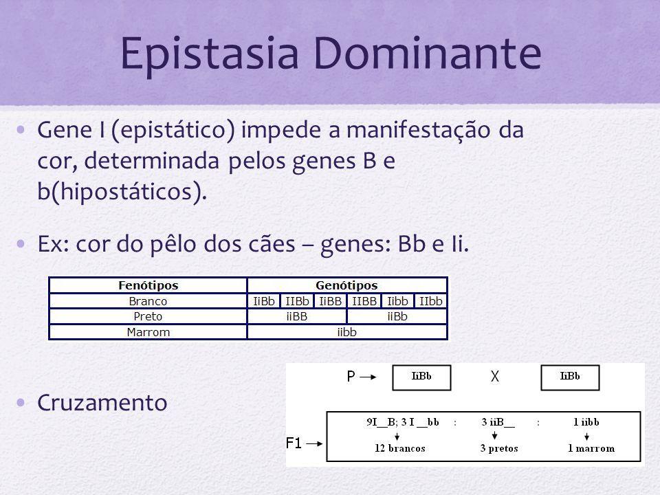 Epistasia Dominante Gene I (epistático) impede a manifestação da cor, determinada pelos genes B e b(hipostáticos).
