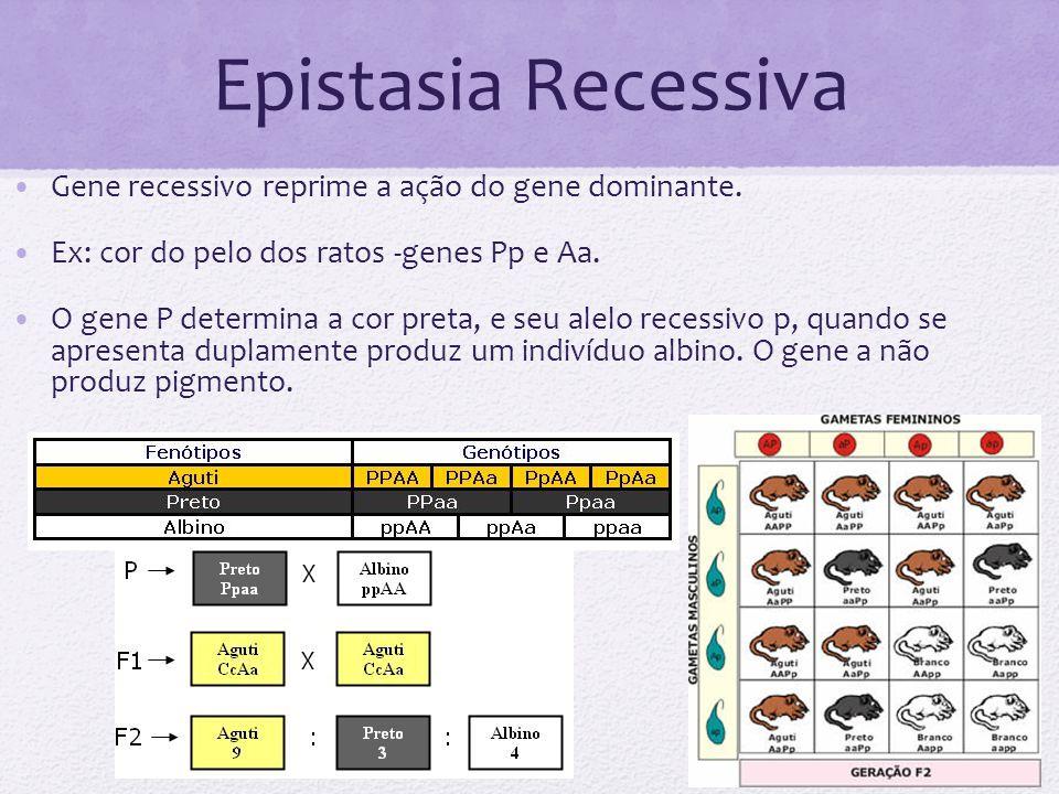 Epistasia Recessiva Gene recessivo reprime a ação do gene dominante.