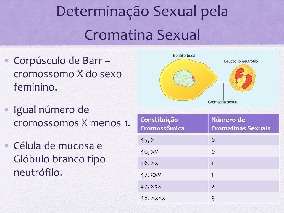 Determinação Sexual pela Cromatina Sexual