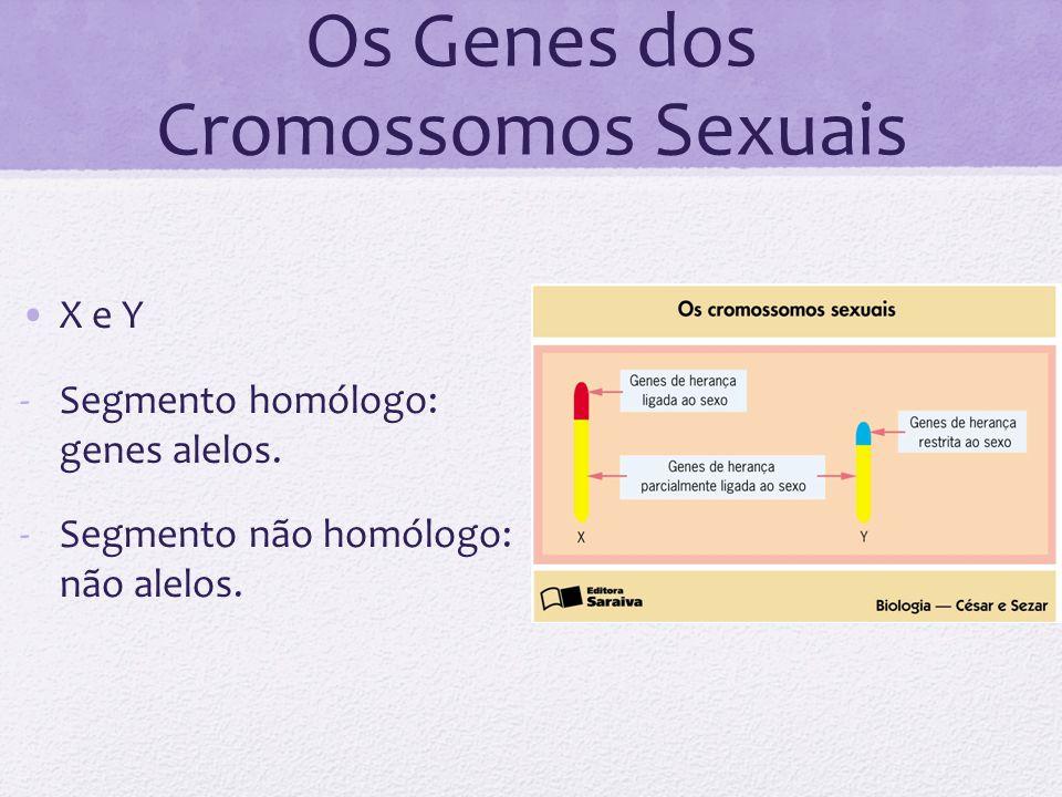 Os Genes dos Cromossomos Sexuais