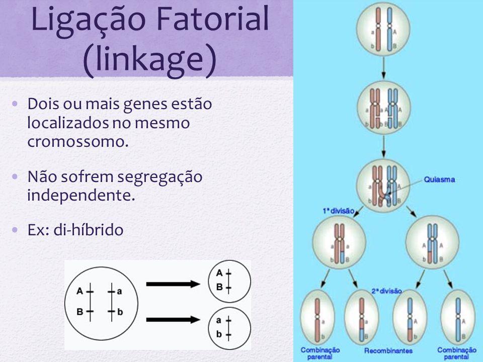 Ligação Fatorial (linkage)