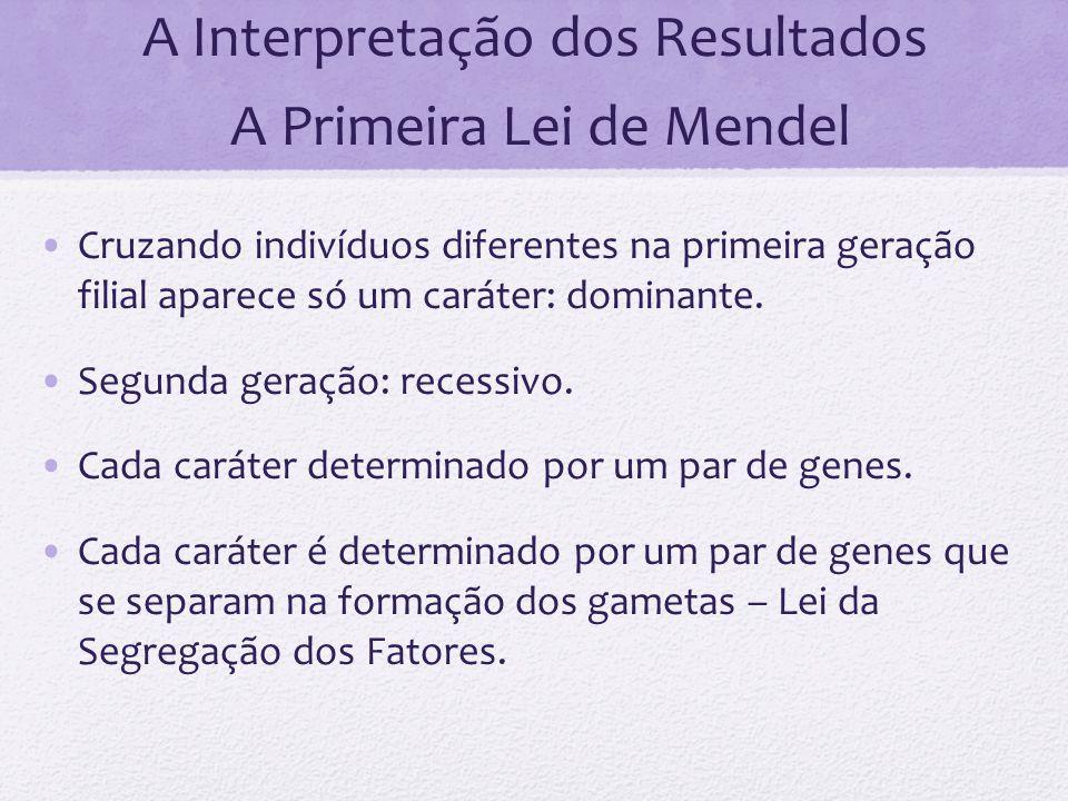 A Interpretação dos Resultados A Primeira Lei de Mendel