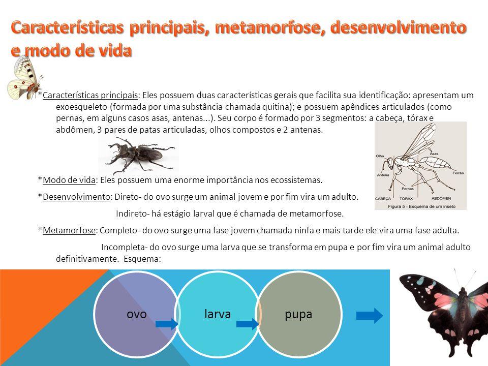 Características principais, metamorfose, desenvolvimento e modo de vida