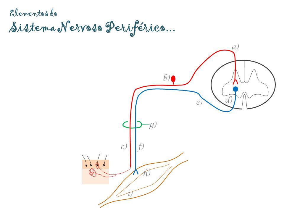 Elementos do Sistema Nervoso Periférico...