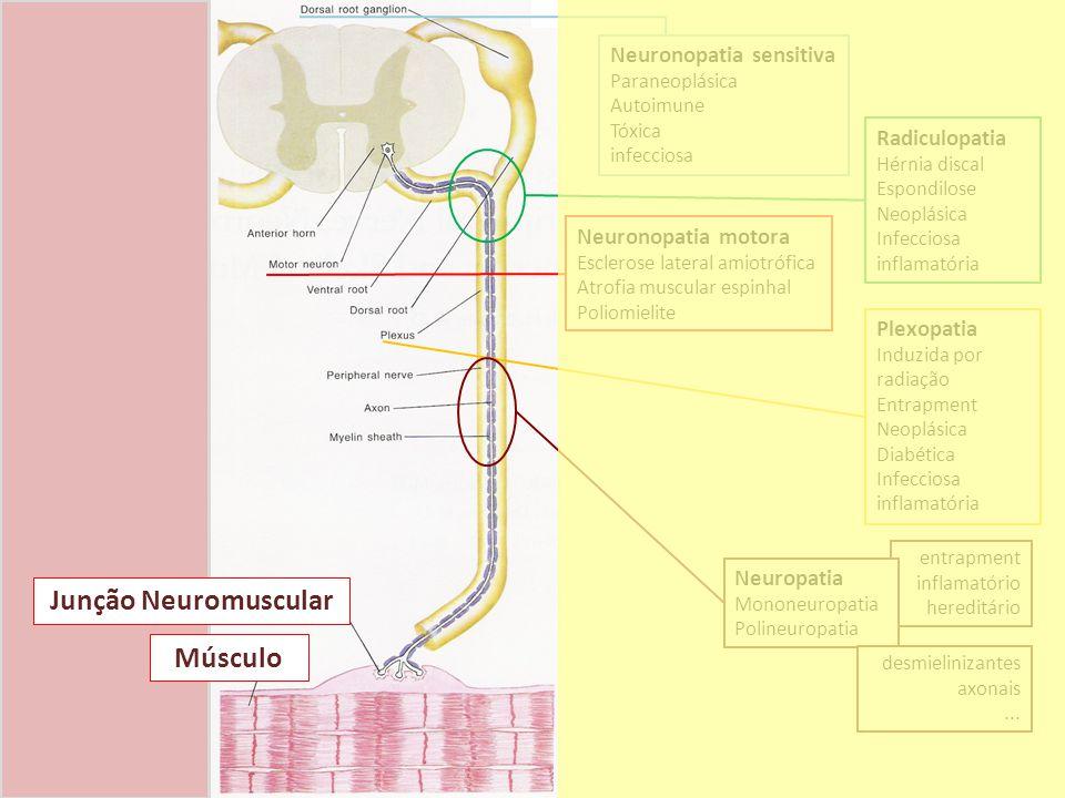 Junção Neuromuscular Músculo