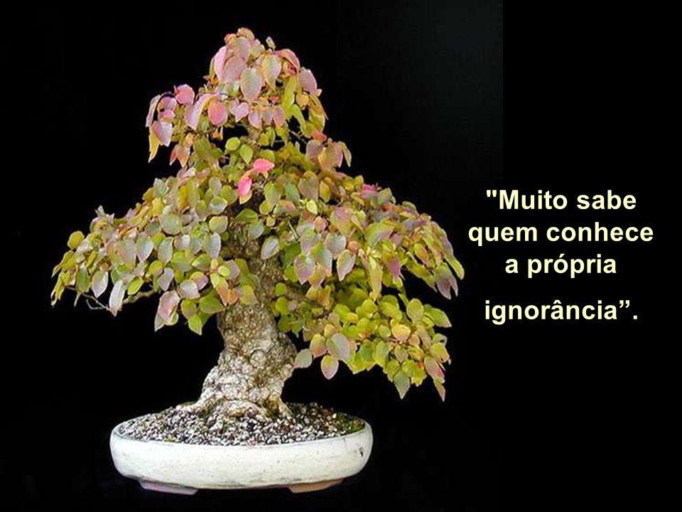 Muito sabe quem conhece a própria ignorância .