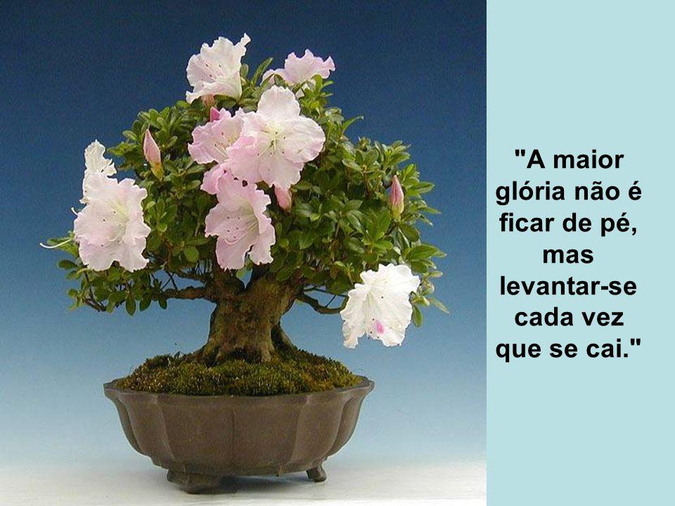 A maior glória não é ficar de pé, mas levantar-se cada vez que se cai