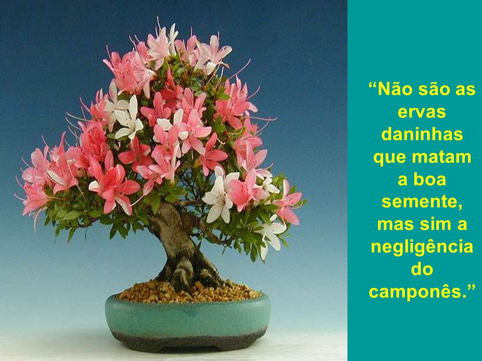 Não são as ervas daninhas que matam a boa semente, mas sim a negligência do camponês.