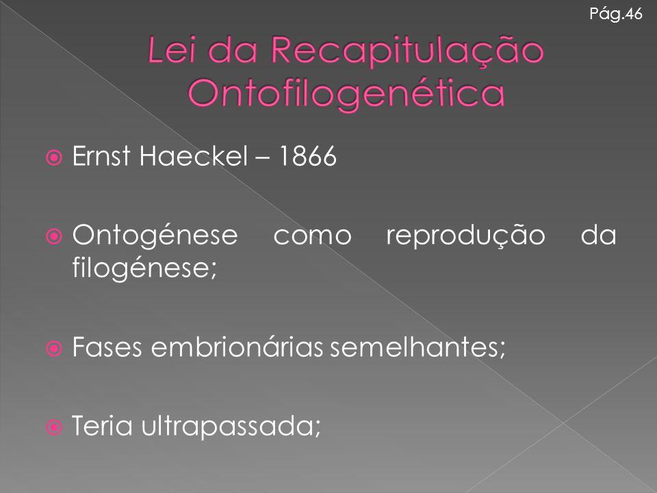 Lei da Recapitulação Ontofilogenética