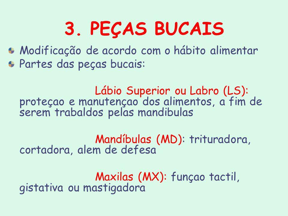 3. PEÇAS BUCAIS Modificação de acordo com o hábito alimentar