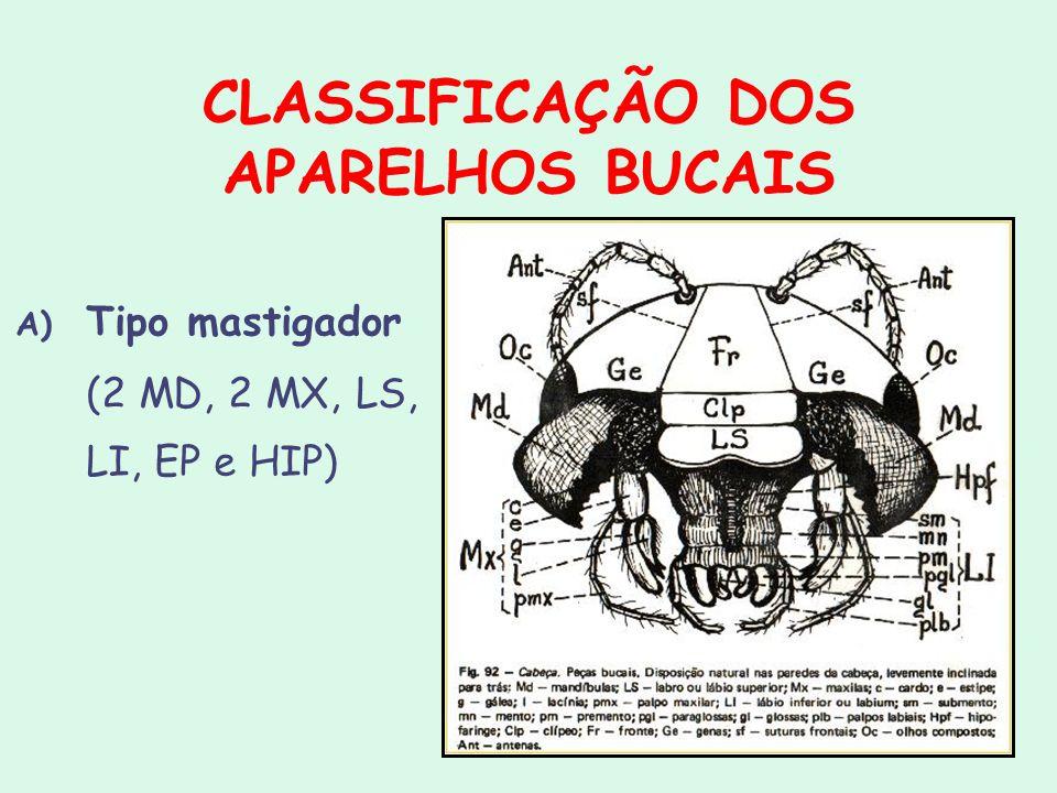 CLASSIFICAÇÃO DOS APARELHOS BUCAIS