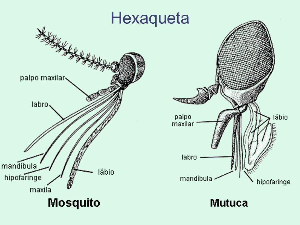 Hexaqueta