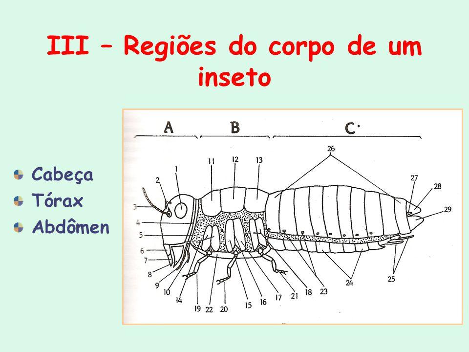 III – Regiões do corpo de um inseto