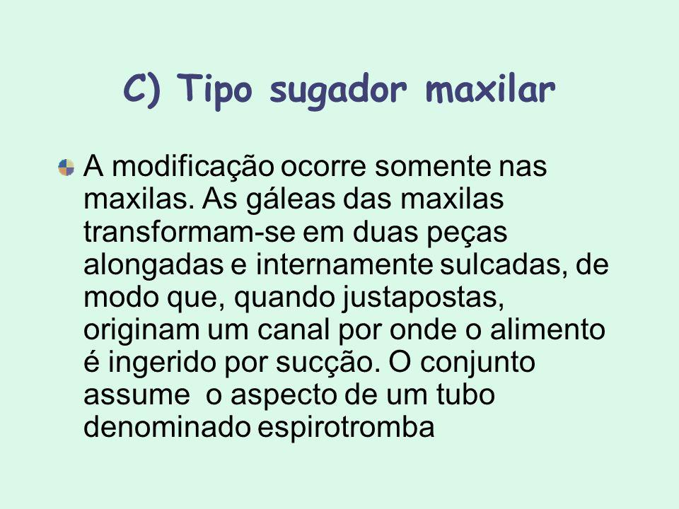 C) Tipo sugador maxilar