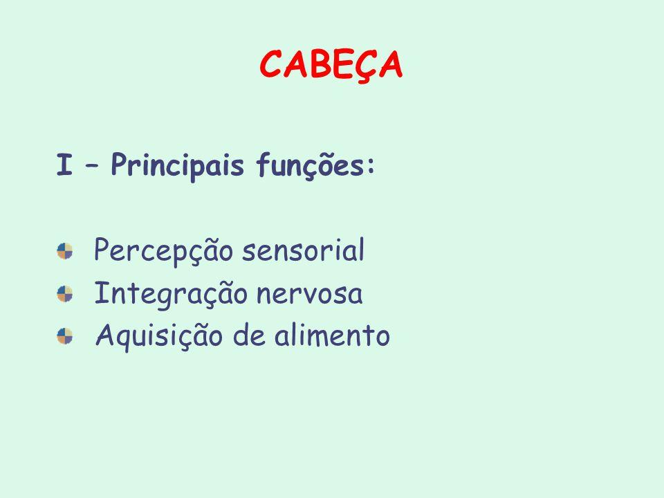 CABEÇA I – Principais funções: Percepção sensorial Integração nervosa