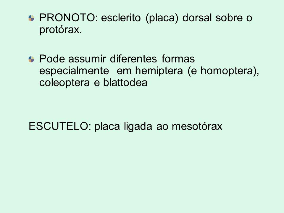 PRONOTO: esclerito (placa) dorsal sobre o protórax.