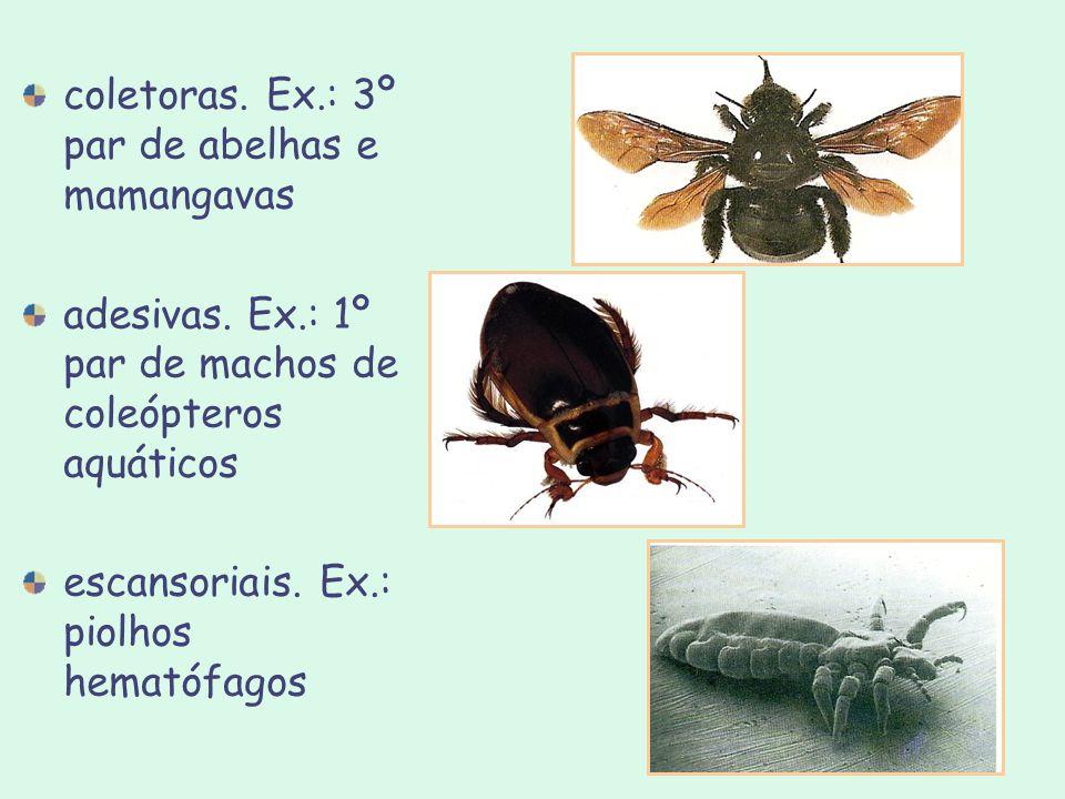 coletoras. Ex.: 3º par de abelhas e mamangavas