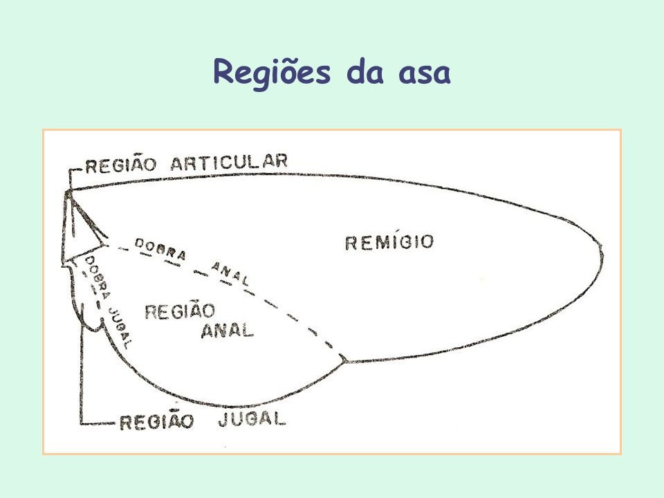 Regiões da asa