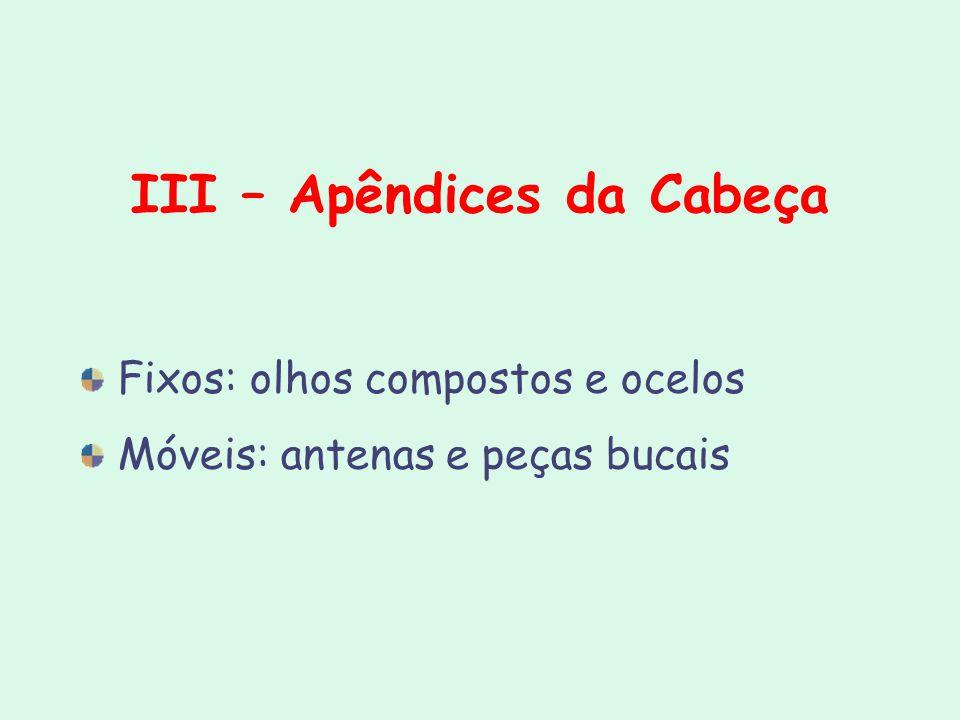 III – Apêndices da Cabeça