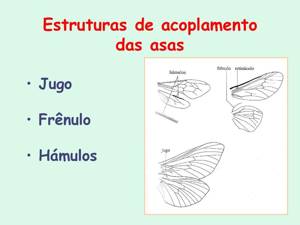 Estruturas de acoplamento das asas