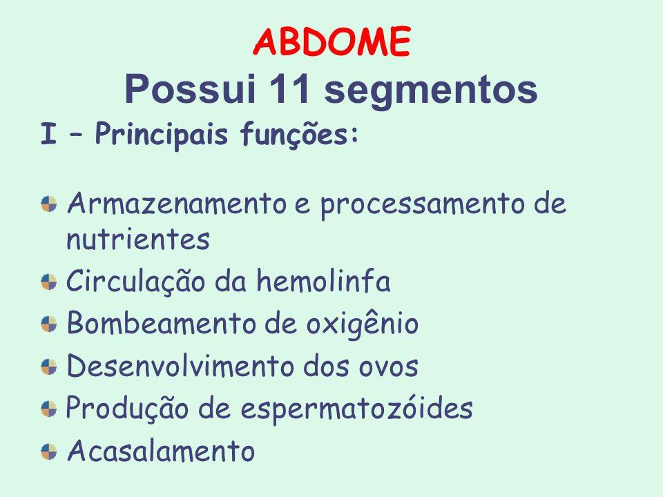 ABDOME Possui 11 segmentos