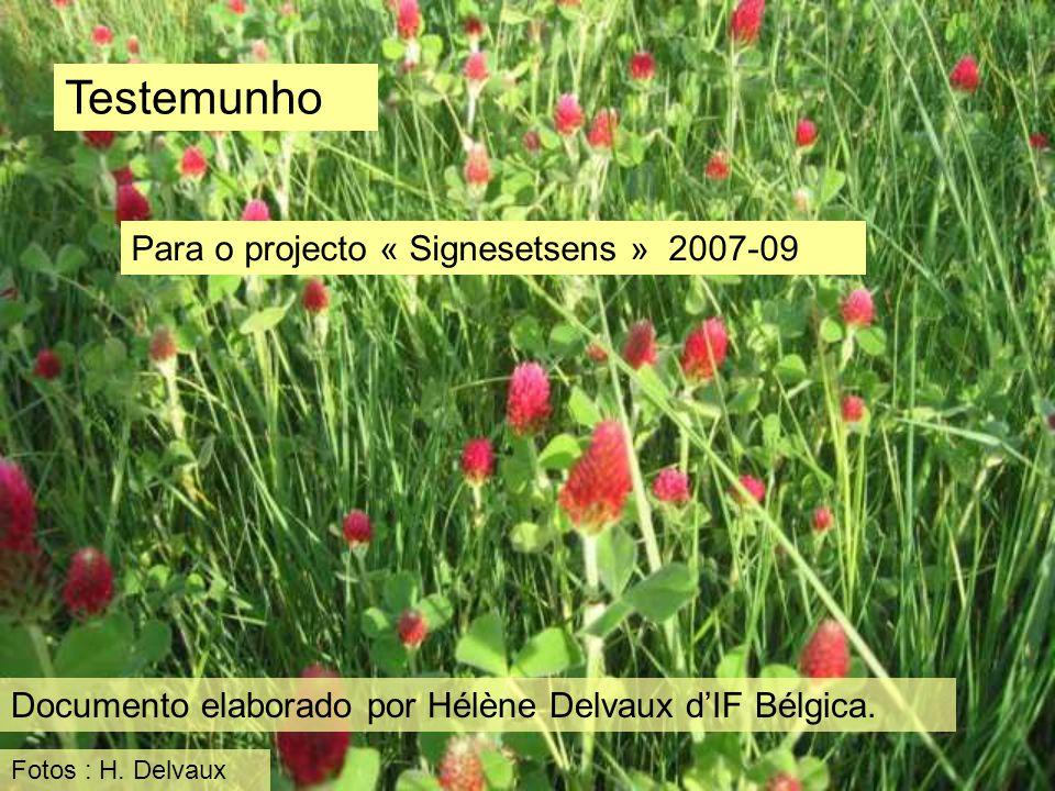 Testemunho Para o projecto « Signesetsens » 2007-09