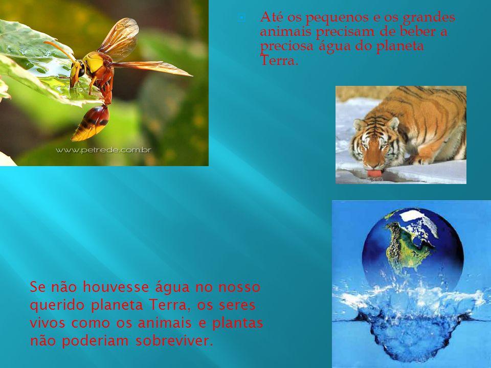 Até os pequenos e os grandes animais precisam de beber a preciosa água do planeta Terra.