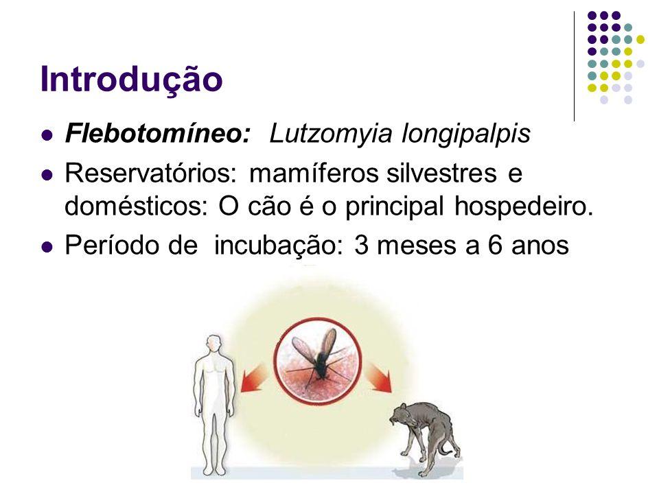 Introdução Flebotomíneo: Lutzomyia longipalpis