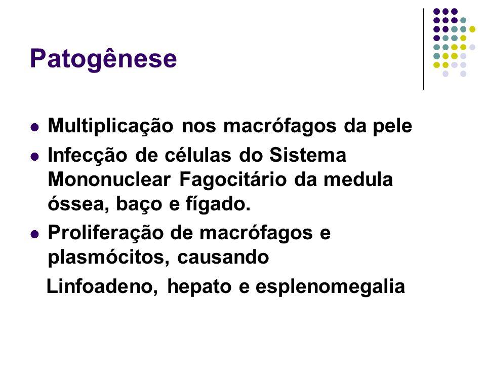 Patogênese Multiplicação nos macrófagos da pele