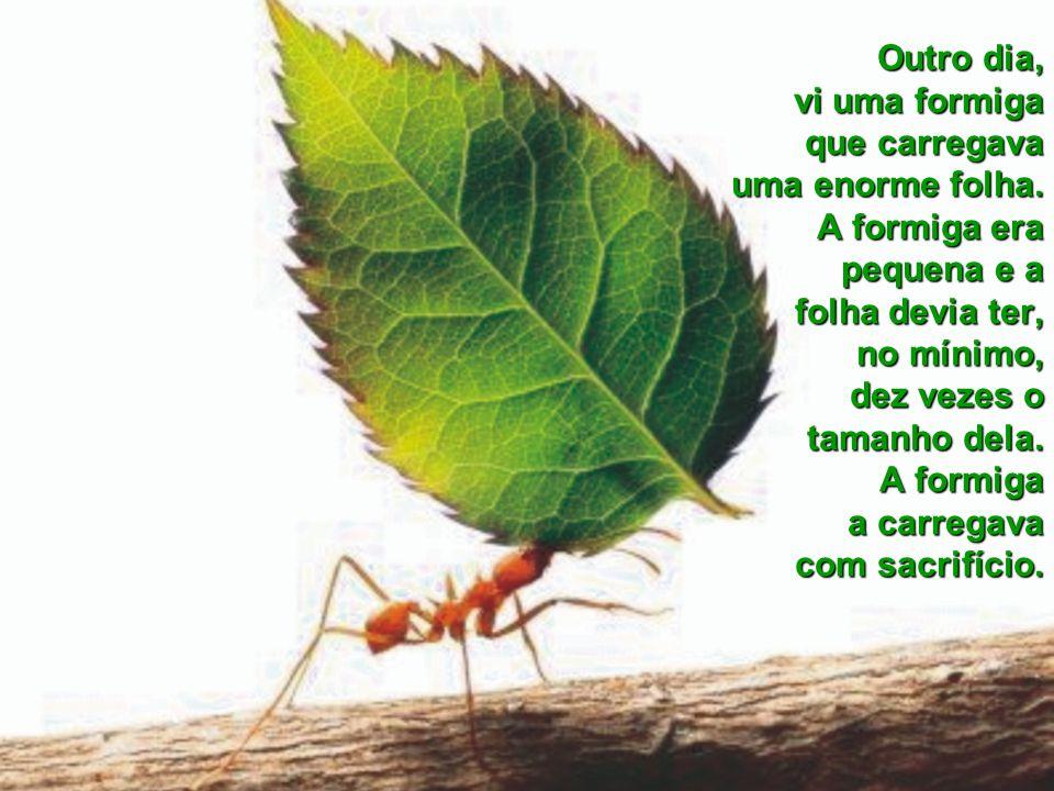 Outro dia, vi uma formiga que carregava uma enorme folha