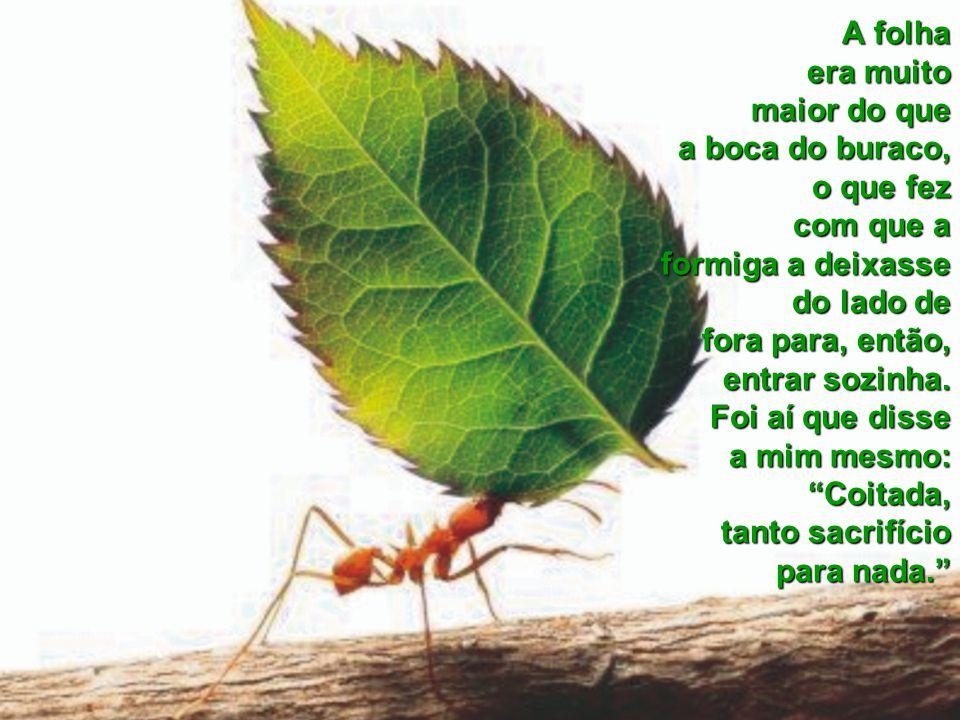 A folha era muito maior do que a boca do buraco, o que fez com que a formiga a deixasse do lado de fora para, então, entrar sozinha.