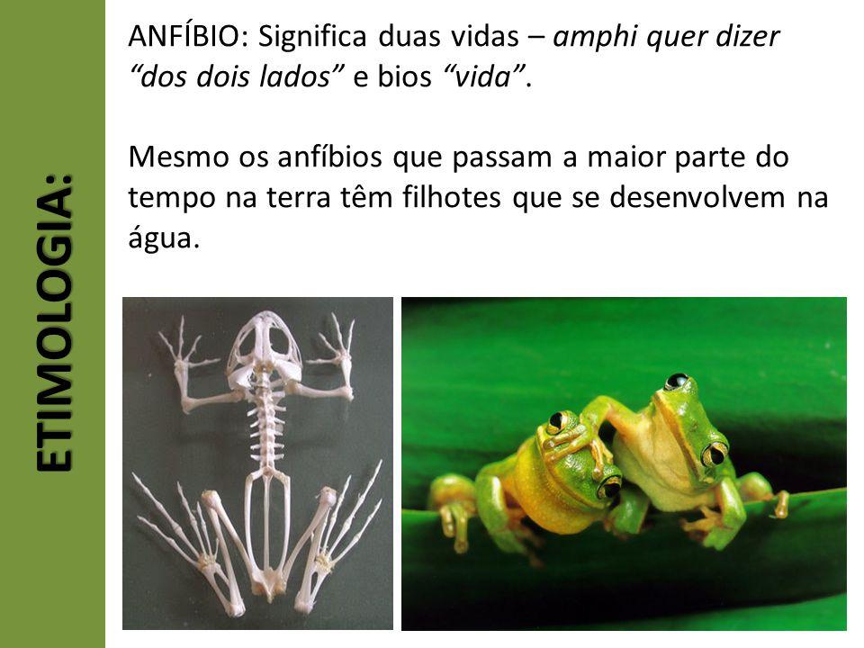 ANFÍBIO: Significa duas vidas – amphi quer dizer dos dois lados e bios vida .