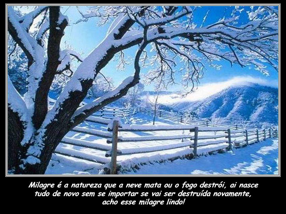 Milagre é a natureza que a neve mata ou o fogo destrói, ai nasce