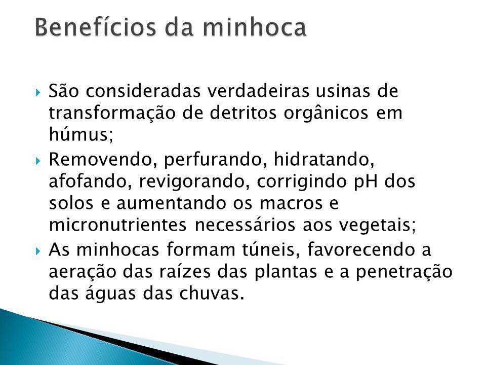Benefícios da minhoca São consideradas verdadeiras usinas de transformação de detritos orgânicos em húmus;