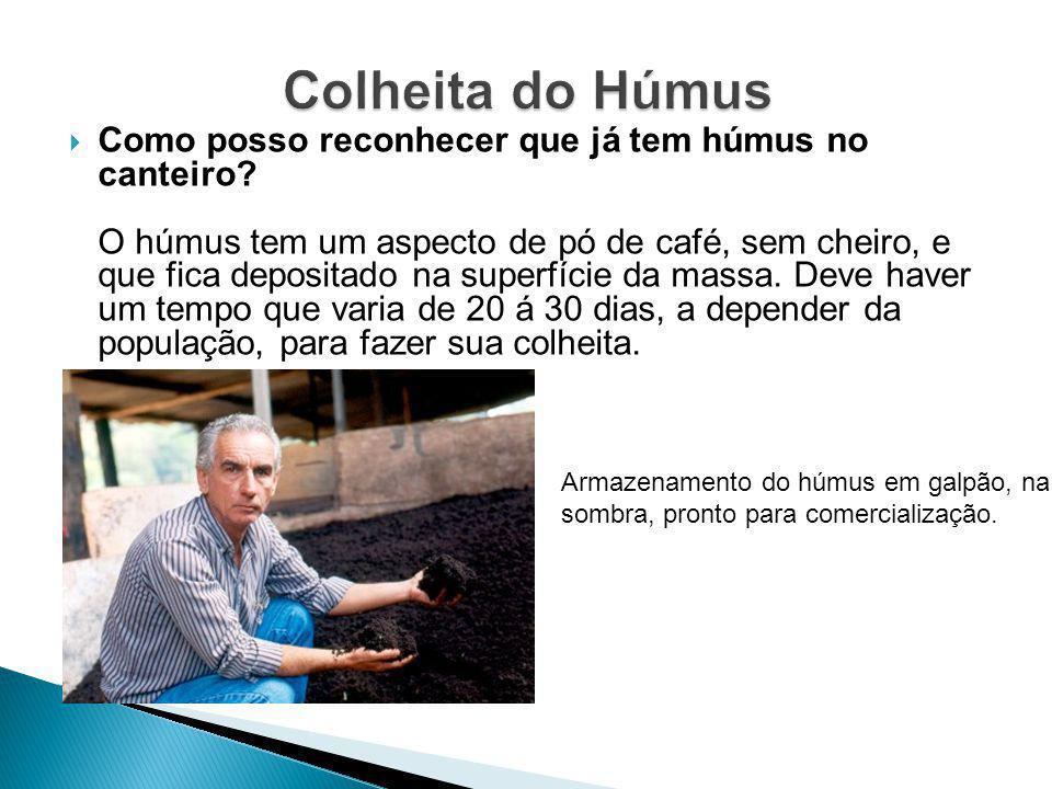 Colheita do Húmus