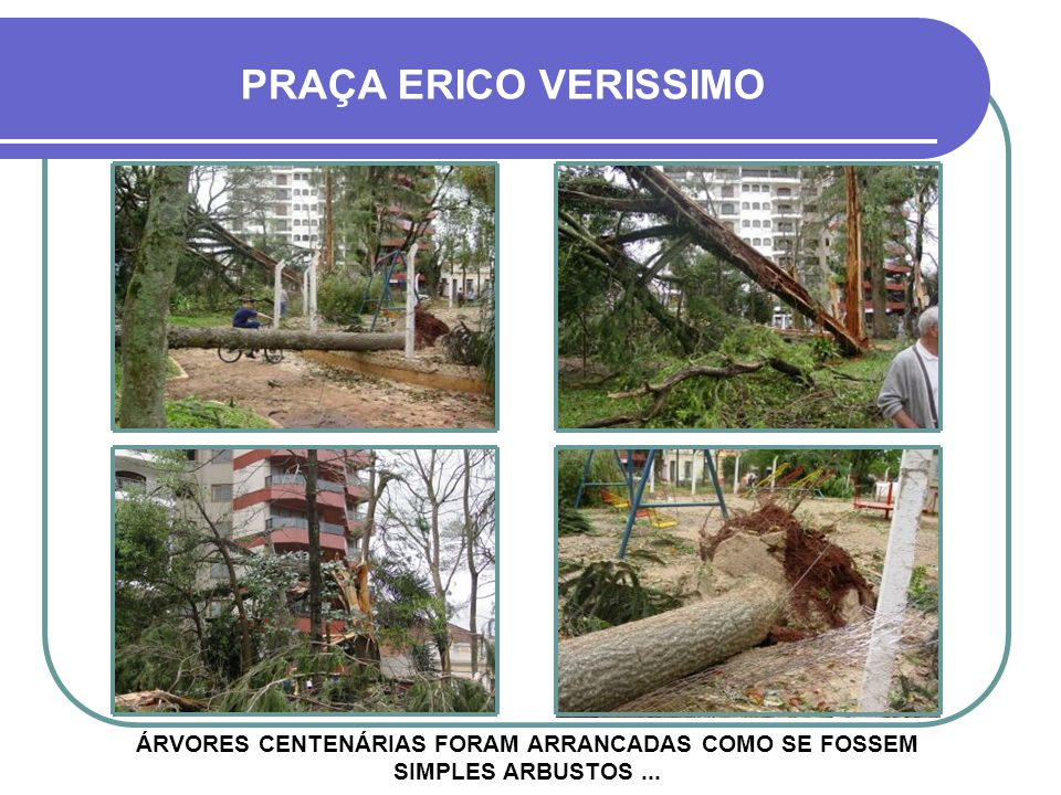 PRAÇA ERICO VERISSIMO ÁRVORES CENTENÁRIAS FORAM ARRANCADAS COMO SE FOSSEM SIMPLES ARBUSTOS ...