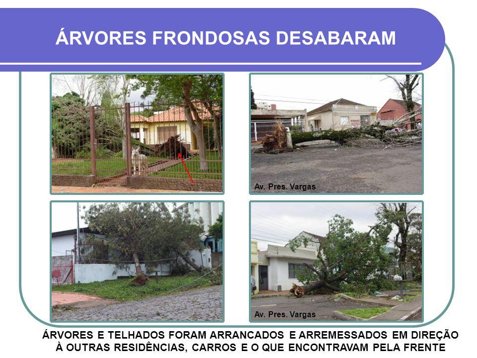 ÁRVORES FRONDOSAS DESABARAM