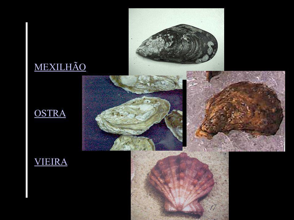 MEXILHÃO OSTRA VIEIRA