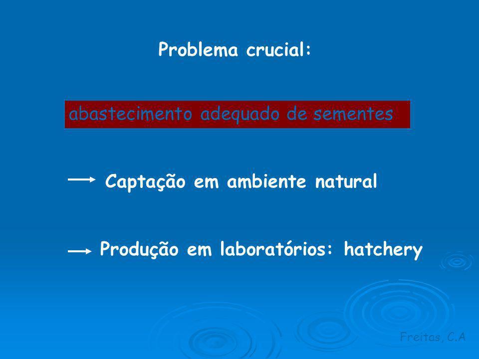 Captação em ambiente natural Produção em laboratórios: hatchery