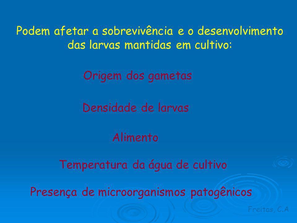 Temperatura da água de cultivo