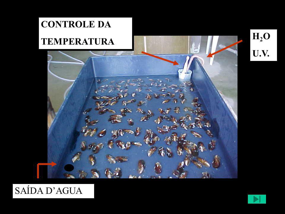 CONTROLE DA TEMPERATURA H2O U.V. SAÍDA D'AGUA