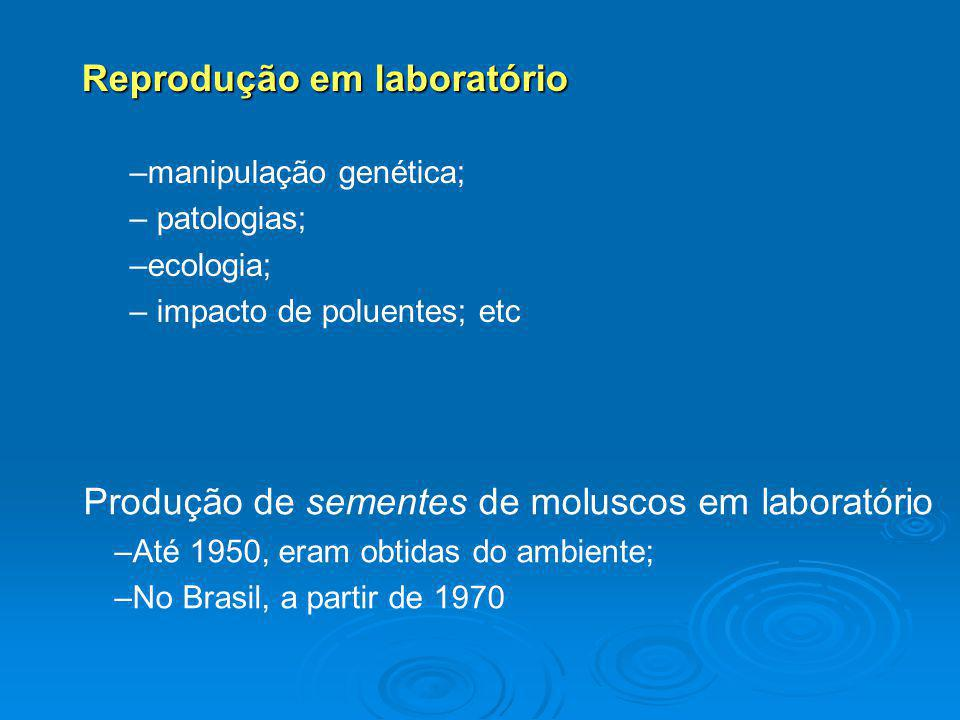 Produção de sementes de moluscos em laboratório