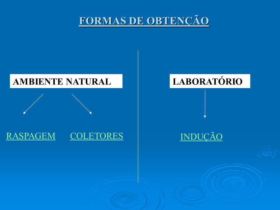 FORMAS DE OBTENÇÃO AMBIENTE NATURAL LABORATÓRIO RASPAGEM COLETORES