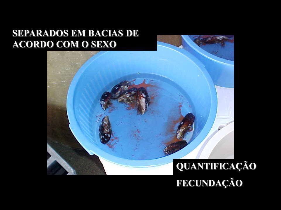 SEPARADOS EM BACIAS DE ACORDO COM O SEXO
